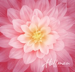 """Dream Big"" Wild Rose- a Hoffman Spectrum Print"