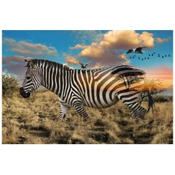 Call of The Wild - Zebra / Savanah #R4511-163