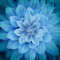 """Dream Big"" Atlantic Blue - a Hoffman Spectrum Print P4389-312 ATLANTIC BLUE"